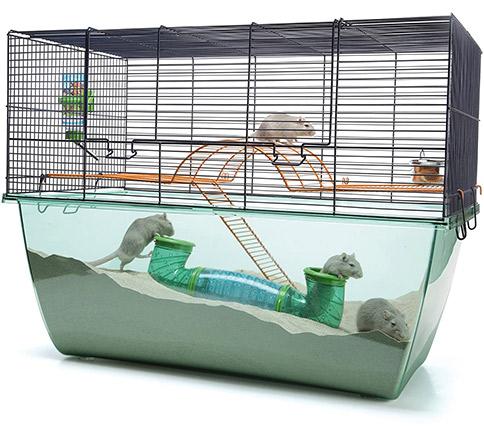 jaula híbrida para roedores